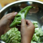 Thumbnail image for Fresh from the Farm – Fava Beans