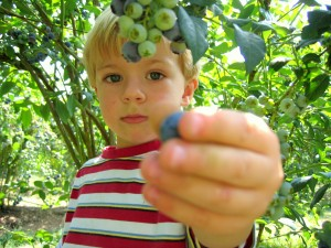kids blueberry picking